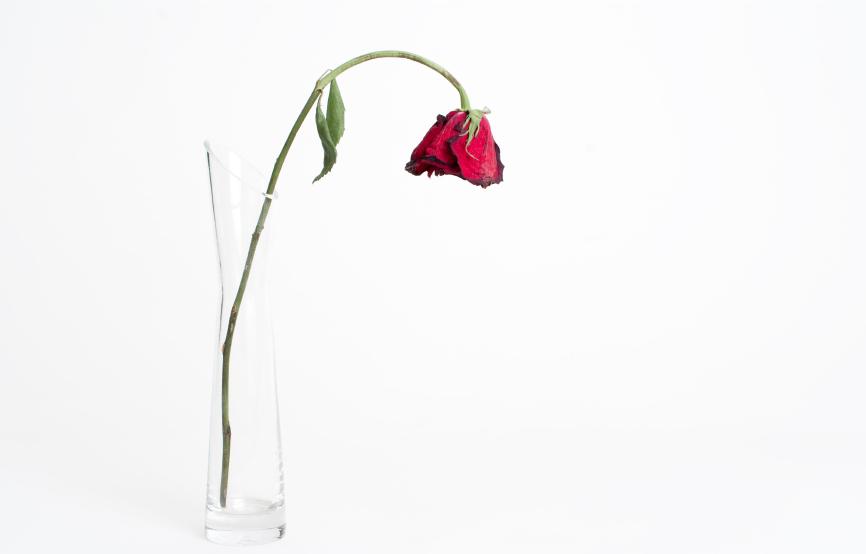 on-premise-analytics-wilting-flower