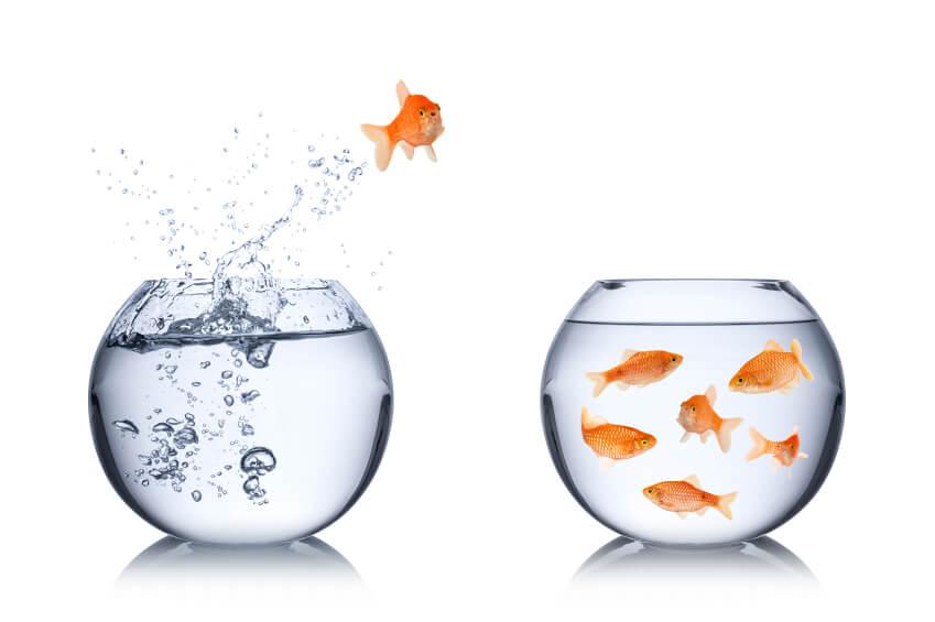 customer analytics real opportunity