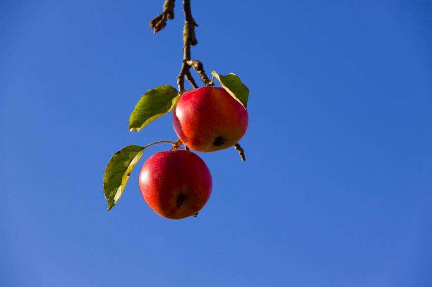 sales analytics low hanging fruit